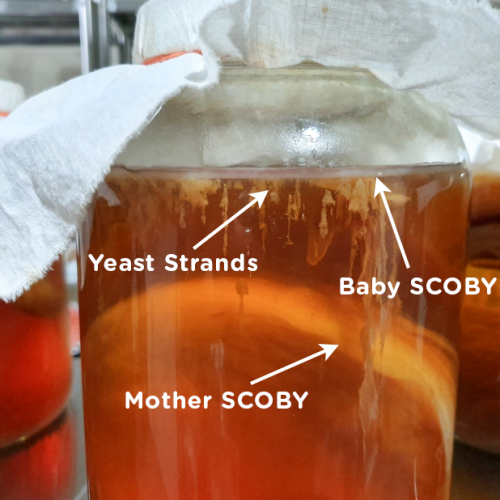 Scoby 2